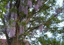 Madarak és fák napja - Díjkiosztó