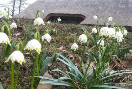 Tavaszi Tőzike a Göcseji Falumúzeumban