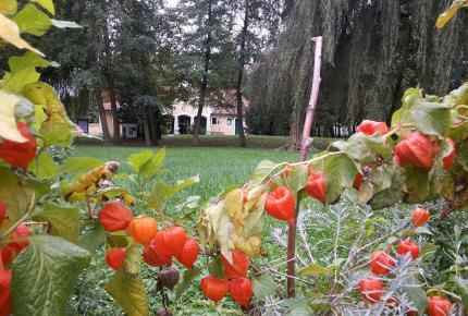 Őszi virágok a skanzenben